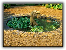 The Herbalists Garden - Dragon in pool